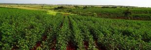 La biodiversité agricole cultivée dans des 'laboratoires hors-murs'