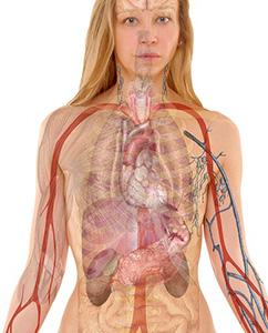 anatomie-reins-femme-organes