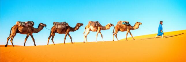 Idée reçue : il n'y a presque pas d'animaux dans le désert