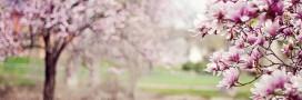 Jardin bio: jardiner en avril