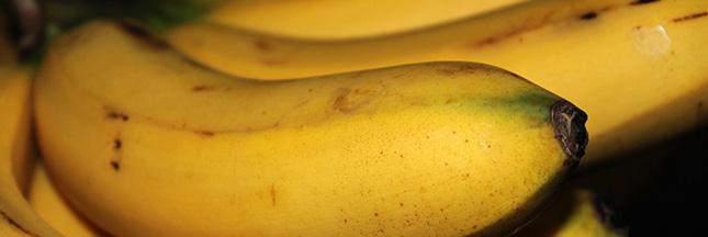 La banane, victime d'un champignon ravageur, n'a pas la pêche