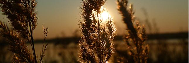 La crème solaire amène-t-elle plus de cancers? (3/3)