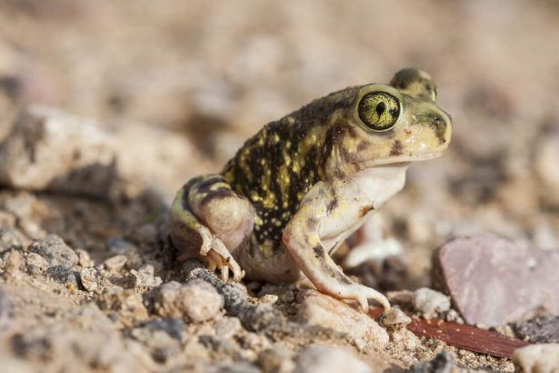 animaux dans le désert