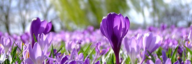 Jardiner en mars : le jardin au début du printemps, le potager