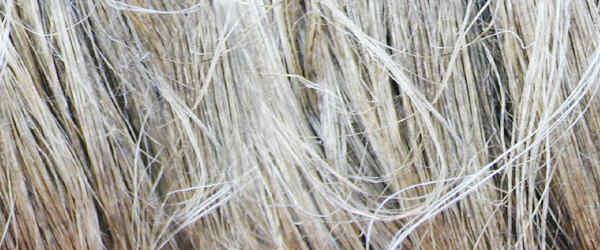 fibres-de-lin