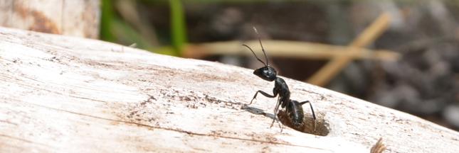 Je participe au recensement des fourmis avec AntArea