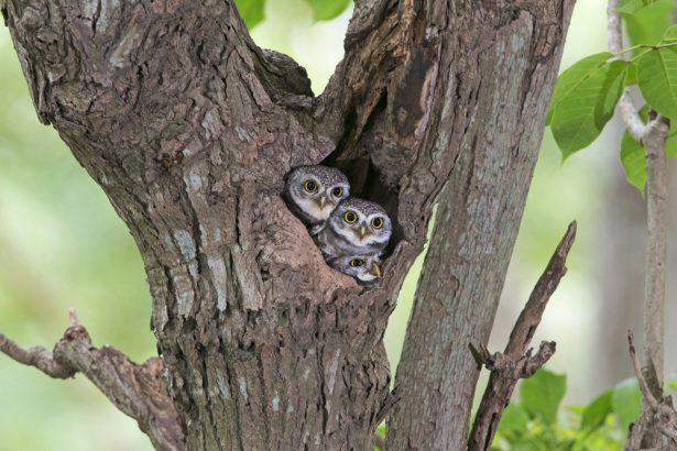 Id e re ue les oiseaux dorment dans un nid d 39 oiseau for Dans ou d en