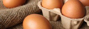 L'oeuf : trésor de nutriments bons pour la santé