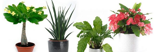 Grâce à Plant Planet, adoptez une plante en voie de disparition !