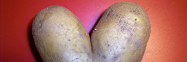 planter des pommes de terre, planter-pomme-de-terre-patate-agriculture-02-ban