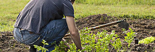 potager-bio-jardin-bio-jardinage-legumes-01-ban