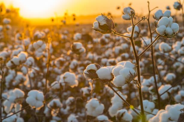 textile polluant