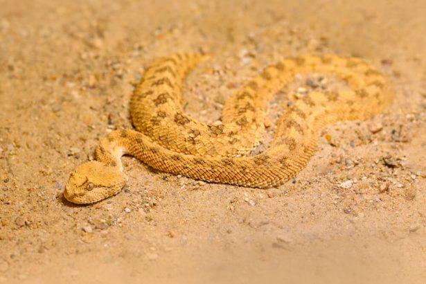 animaux dans le desert