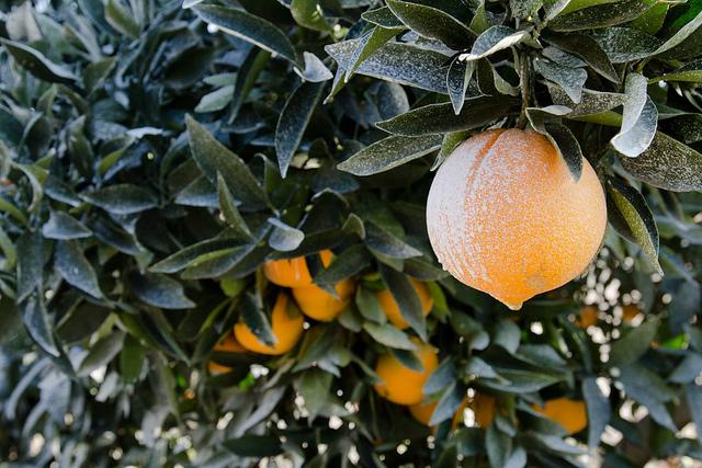 pesticides-fruits-légumes-aliments