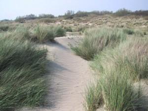 Dunes aquitaines
