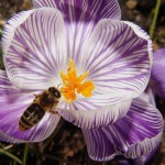 Pollinisation anti-pesticides