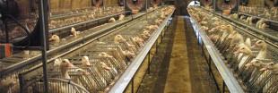 Cruauté envers les animaux et consommation durable