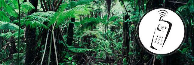 Pour sauver l'Amazonie, les arbres équipés de téléphones portables !