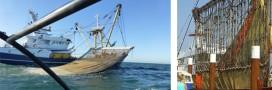 La pêche électrique va-t-elle débarquer en France?