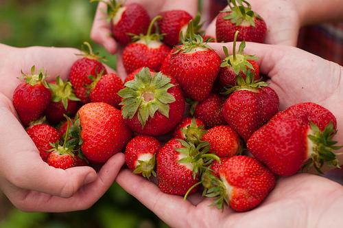 fraise-fruit-été-aliment-bonne-santé-vivre-longtemps