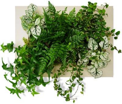 idées cadeaux  cadre végétal