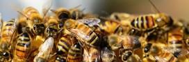 Des ruches sans miel à Dijon pour lutter contre la disparition des abeilles