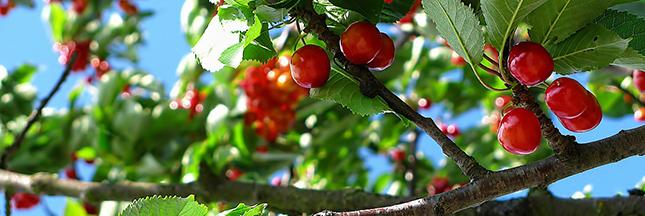 Conseils jardinage les gestes de juin au jardin bio et for Juin au jardin