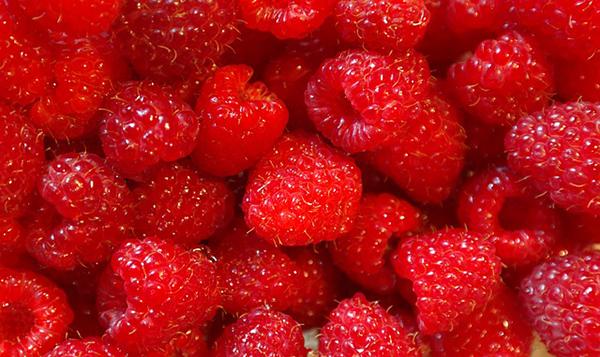 framboise-fruit-antioxydant-bienfaits-05