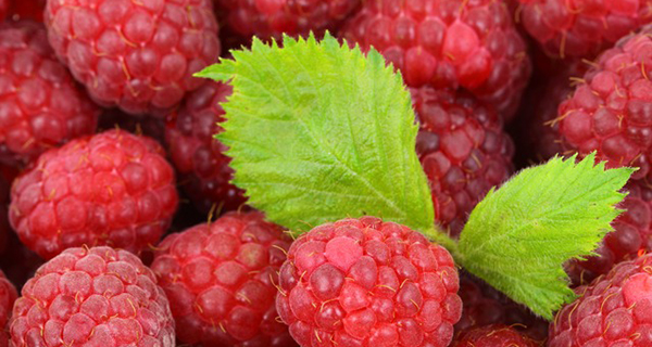 framboise-fruit-antioxydant-bienfaits-09