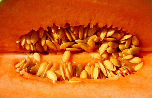 CC: robpatrick faux melon charentais produit des charentes france
