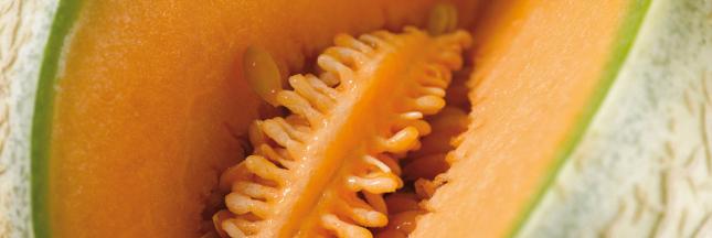 melon-BAN