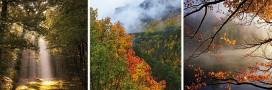 Recensez la biodiversité des forêts de votre région!