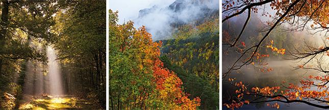 Recensez la biodiversité des forêts de votre région !