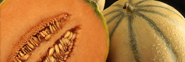 melon charentais, produit français © Shutterstock http://www.shutterstock.com/fr/pic-29910016/stock-photo-charentais-melon-with-half-on-black-background.html