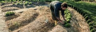 Faire un paillage avec la tonte de pelouse