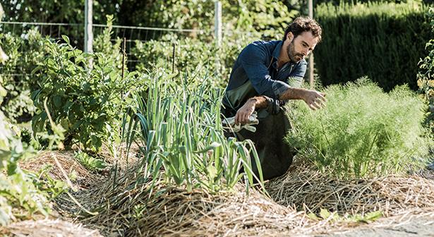 faire un paillage avec la tonte de pelouse. Black Bedroom Furniture Sets. Home Design Ideas