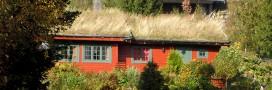 Comment entretenir une toiture végétalisée extensive?