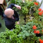 Jardinothérapie 1