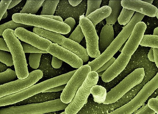 bacteries-maladie-01