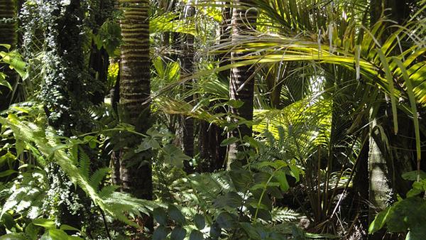 foret-amazonienne-amazonie-bresil-deforestation-01