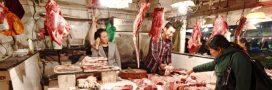 Chine: les animaux menacés finissent toujours à la marmite!