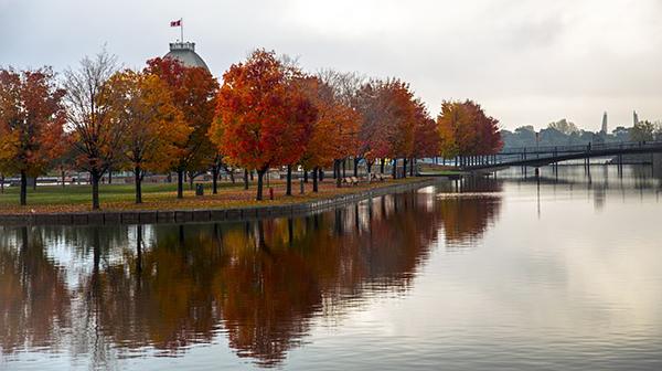 montreal-insolite-durable-arbres-lac-vieux-port-01