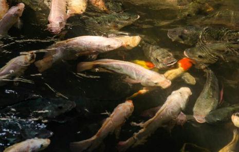 poissons-moustiques-centre-commercial-bangkok-02