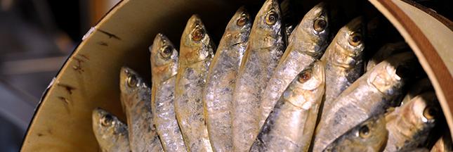 Les poissons de Méditerranée toujours plus petits