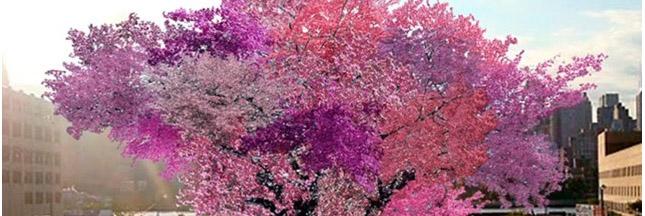 L'arbre aux 40 fruits : prouesse environnementale ou étrange création ?