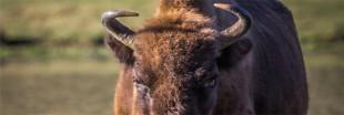 A la rencontre de la grande faune sauvage ... en France