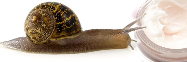 La bave d'escargot a de multiples vertus pour la cosmétique !