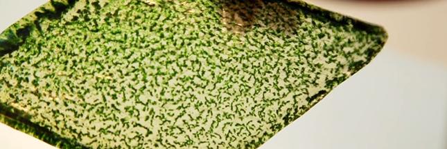 Des feuilles artificielles pour respirer partout
