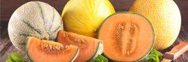 Légumes et fruits d'été: le melon