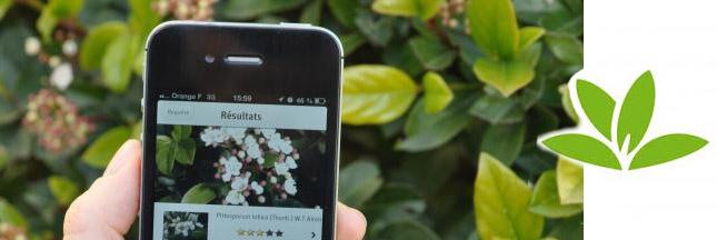 Pl@ntNet : une application qui identifie les végétaux !